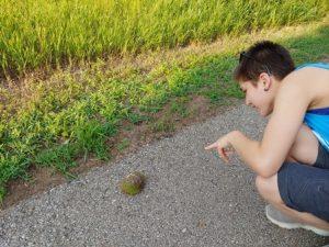 Turtle on trail